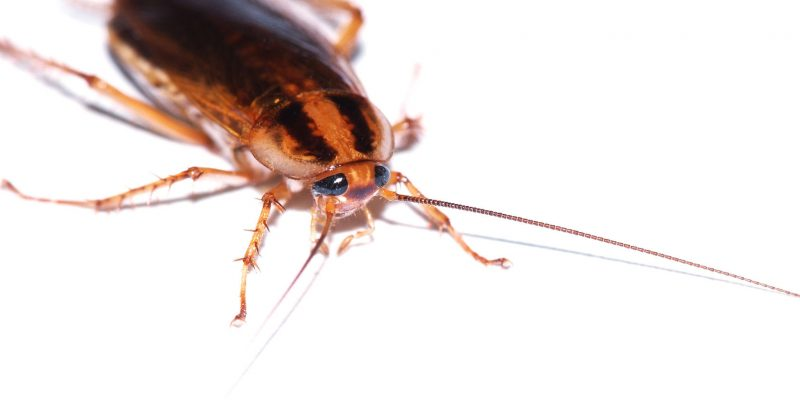 Pest Control and Elimination Services